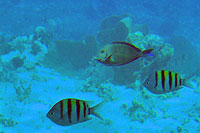 Cozumel Unlimited Snorkel Fish