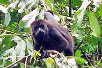 Sac Be Monkey Preserve