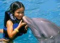 Cozumel Dolphin Encounter