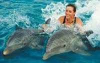 Dolphin Swimming in Cozumel Mexico