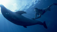 Cozumel Dolphins