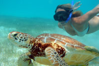 Sea Turtle Snorkeling Tour