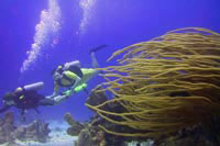 Specialty Scuba Diving Training in Cozumel