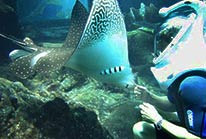 Sealife Tour Cozumel