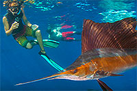 Sailfish Snorkeling Adventure