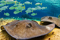 Stingray Beach Cozumel Excursion